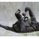 Cum se epileaza mamele cand au nevoie ACUM de picioare fine