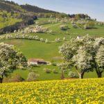 Corcodușii, merii și țuica – rădăcini din grădină